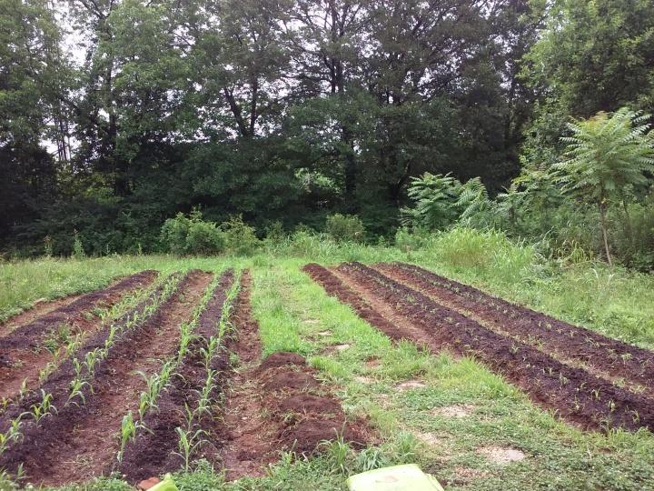 Beds from left to right: Squash, Corn, Corn, Squash (split row), Corn, Corn