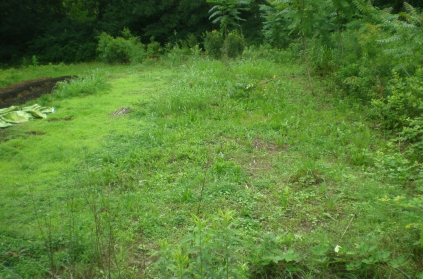 This is the entirety of the three sisters plot. Notice the grasses, legumes, and broadleaf weeds already present. Three sisters garden is an imitation of this very ecosystem.